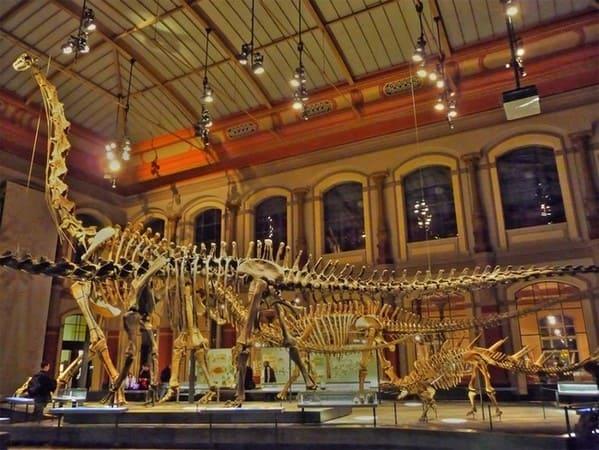 музея естествознания