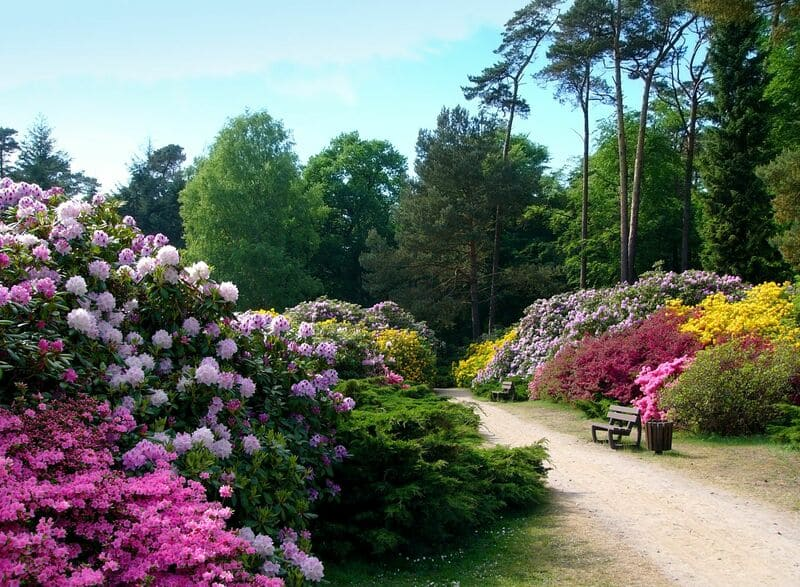 Рододендрон-парк в Бремене